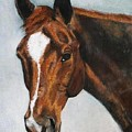 Horse Art Portrait Of Horse Maduro by Bets Klieger