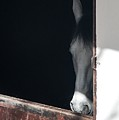 Horse At A Bull Ring by NaturesPix