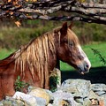 Horse At Stone Wall by Terry Dickinson