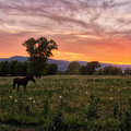 Horse At Sunset by Stacy White