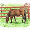 Horse At The Ranch Watercolor Painting by Irina Sztukowski
