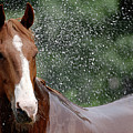 Horse Bath I by Julie Niemela