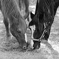Horse Buddies by Angela Murdock