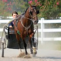 Horse Carriage Racing In Delmarva by Kim Bemis