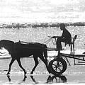 Horse Cart by Sydney Alvares