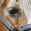 Horse Close Up by Bob Slitzan