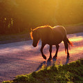 Horse Crossing The Road At Sunset by Mikel Martinez de Osaba