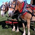 Horse Drawn Wagon by Emily Kelley
