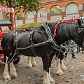 Horse Dray by Chris Horsnell