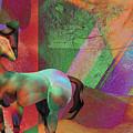 Horse Dreams by David Derr