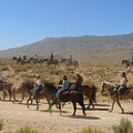 Horse Drive From June Lake To Bishop California by Christine Till