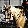 Horse Equus Ferus Caballus V2 by John Straton