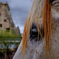 Horse Eye -2  by Okan YILMAZ