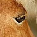 Horse Eye by Larry Jost