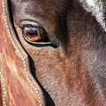 Horse Eye by Todd Klassy