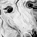 Horse Eyes by Eloise Schneider Mote