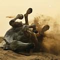 Horse Game by Artur Baboev