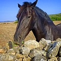 Horse Grazing At San Adeodato by Dee Flouton