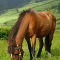 Horse Grazing by Gaspar Avila