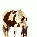 Horse Grazing by Michael Vigliotti