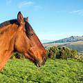 Horse Head Closeup by Jess Kraft