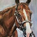 Horse Head Portrait by Maria Reichert