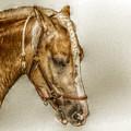 Horse Head Portrait by Randy Steele