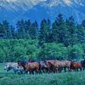 Horse Herd by Eleszabeth McNeel