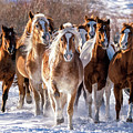 Horse Herd In Snow by David Soldano