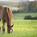 Horse In Field Near Ballyvaloo, Blackwater, Wexford by Ian Middleton