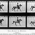 Horse In Motion, 1878 by Granger