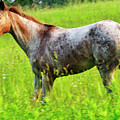 Horse In Pasture Field by Thomas R Fletcher