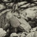 Horse In Profile by Toula Mavridou-Messer