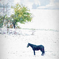 Horse In Snowy Pasture 7596 by Dan Beauvais