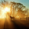 Horse In The Fog At Dawn by David Arment