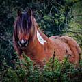 Horse In The Irish Countryside by James Truett