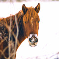 Horse In Winter by Steve Karol