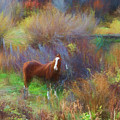 Horse Of Many Colors by Jim Cook
