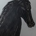 Horse Named Misty by Jim McGraw