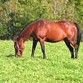 Horse by Katina Cote