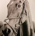 Horse by Kenneth Pettay