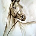 Horse by Leyla Munteanu