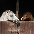 Horse Love by Okan YILMAZ