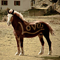 Horse Love by Trish Tritz
