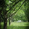 Horse by Lyssa Peace