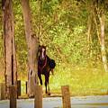 Horse by Nadav Cohen