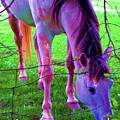 Horse Of A Different Color by Susan Carella