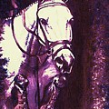Horse Painting Jumper No Faults Purple by Bets Klieger