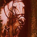 Horse Painting Jumper No Faults Soft Browns by Bets Klieger