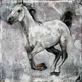 Horse Painting Stallion Lipizzaner by Ginette Callaway
